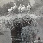 Heimatverein Grethener Störche